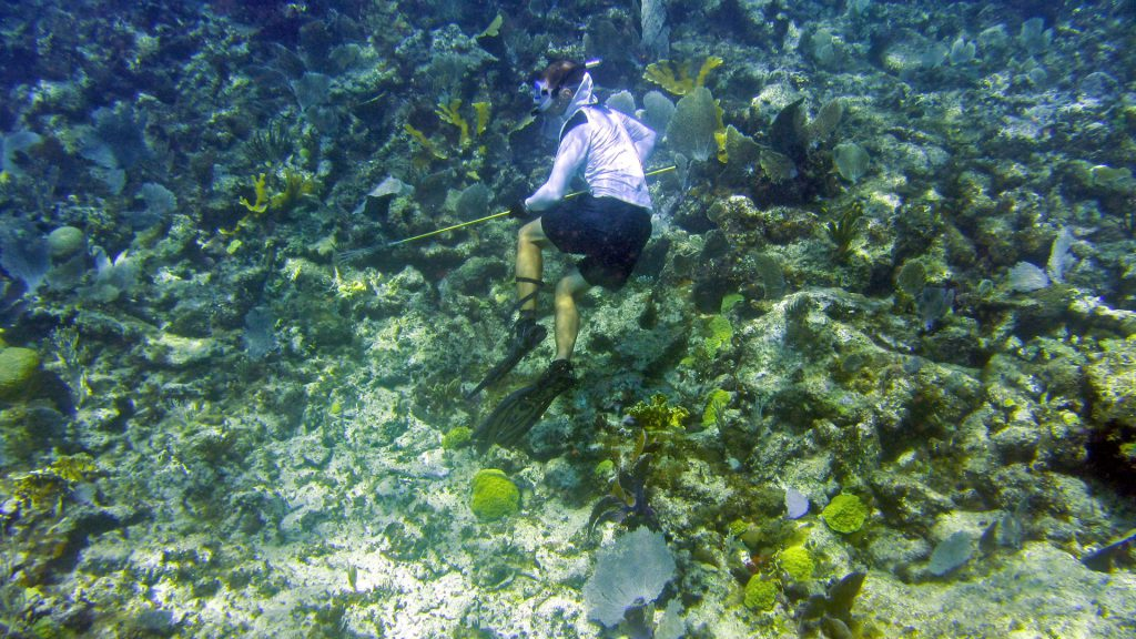 Spearfishing for lobsters
