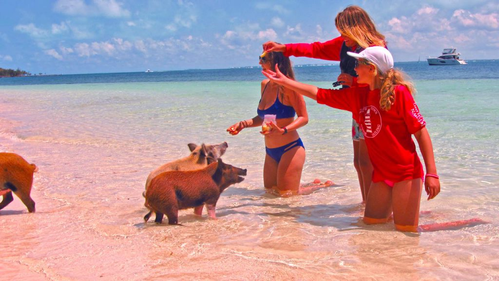Feeding the pigs of Noname Cay