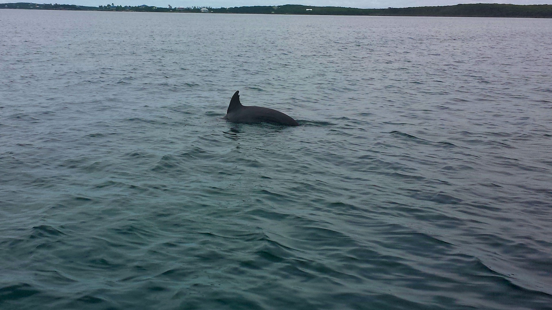 The dolphins of Tilloo Cay